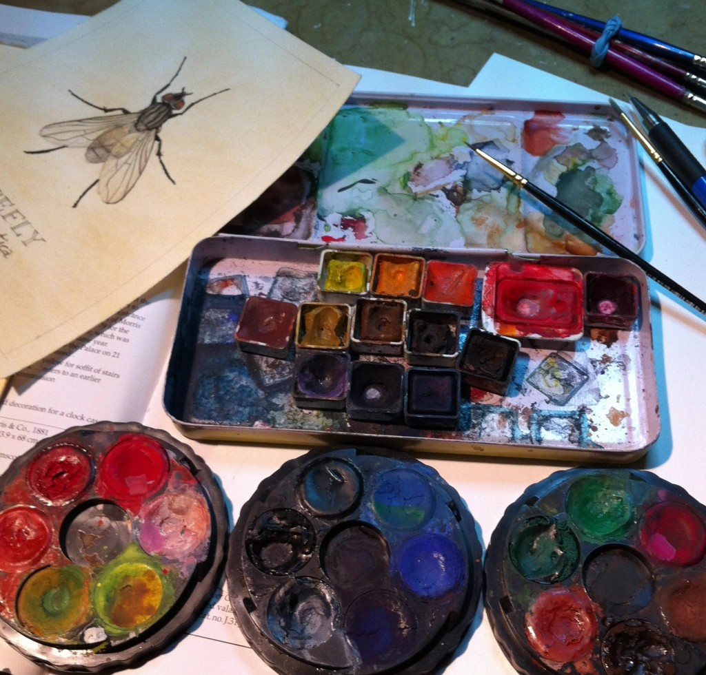My watercolor set and scientific illustration of the House Fly